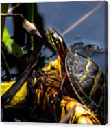 Ant Meets Turtle Canvas Print