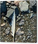 Antarctic Feather Canvas Print