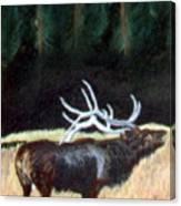 Antelop Canvas Print