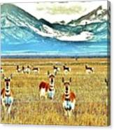Antelope At Attention Canvas Print