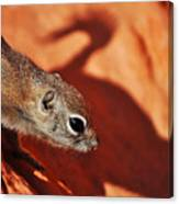 Antelope Ground Squirrel II Canvas Print