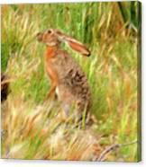 Antelope Jackrabbit Canvas Print