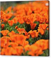 Antelope Valley California Poppies Canvas Print