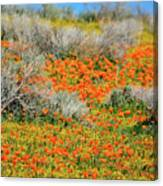 Antelope Valley Poppies Canvas Print