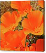 Antelope Valley Poppy Portrait Canvas Print