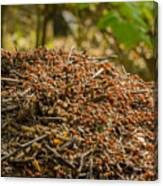 Anthill In Forest Canvas Print
