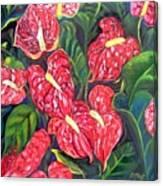 Anthurium Flowers Canvas Print
