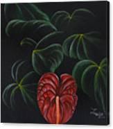 Anthurium Canvas Print