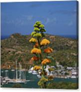 Antigua National Flower  Canvas Print