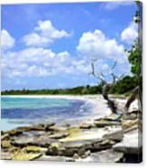 Antigua Shoreline Canvas Print