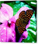 Antillean Crescent Butterfly On Impatiens Canvas Print