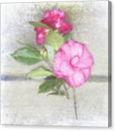 Antique Camellias Square Canvas Print