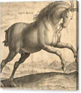 Antique Horse Engraving - Equus Regius Canvas Print
