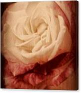 Antique Rose - In Full Bloom Canvas Print