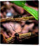 Ants Adventure Canvas Print