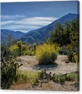 Anza-borrego Desert State Park Desert Flowers Canvas Print
