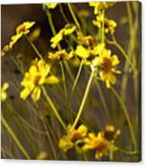 Anza Borrego Desert Sunflowers 1 Canvas Print