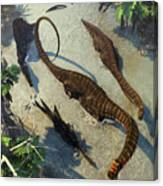 Apatosaurus From Above Canvas Print