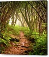 Appalachian Hiking Trail - Blue Ridge Mountains Forest Fog Nature Landscape Canvas Print