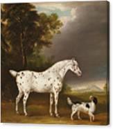 Appaloosa Horse And Spaniel Canvas Print