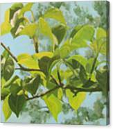 Apple A Day Canvas Print