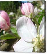 Apple Blossom Artwork Spring Apple Tree Baslee Troutman Canvas Print