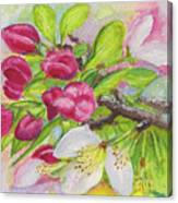 Apple Blossom Buds On A Greeting Card Canvas Print