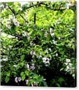 Apple Blossom Digital Painting Canvas Print
