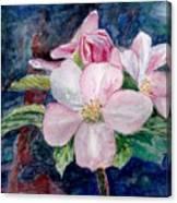 Apple Blossom - Painting Canvas Print