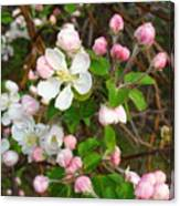 Apple Blossom Pink Canvas Print