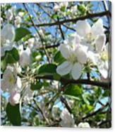 Apple Blossoms Art Prints 60 Spring Apple Tree Blossoms Blue Sky Landscape Canvas Print