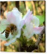 Apple Blossoms With Honey Bee Canvas Print