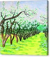 Apple Garden In Blossom Canvas Print