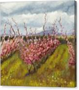 Apple Hill Springtime Canvas Print