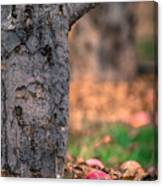 Apple Not Far From Tree Canvas Print