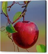 Apple On A Tree Canvas Print