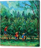Apple Pickers  Littletree Orchard  Ithaca Ny Canvas Print