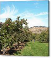 Apple Picking Canvas Print