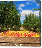 Apple Picking Season Canvas Print