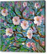 Apple Tree Blossom Canvas Print
