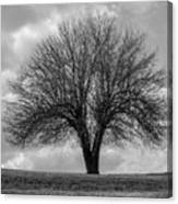 Apple Tree Bw Canvas Print