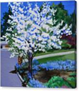 Apple Tree in Spring Canvas Print