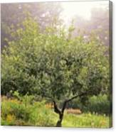 Apple Tree In The Garden Canvas Print