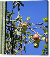 Apple Tree With Apples And Flowers. Amazing Nature Canvas Print