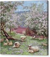 Appleblossom Canvas Print