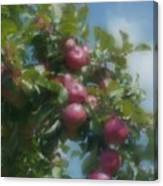 Apples And Sky Canvas Print