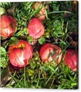 Apples From My Garden Canvas Print