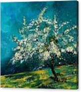 Appletree In Spring Canvas Print