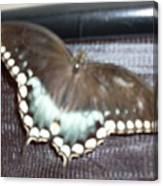 Aqua Wings Canvas Print