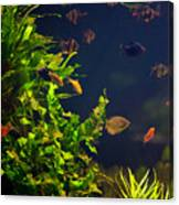 Aquarium Fish And Plants In Zoo Canvas Print